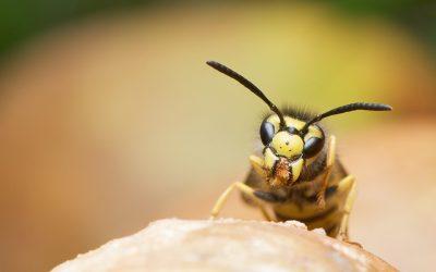 Wasp Phobia: Real Life Success Story