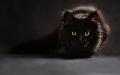 Cat Phobia