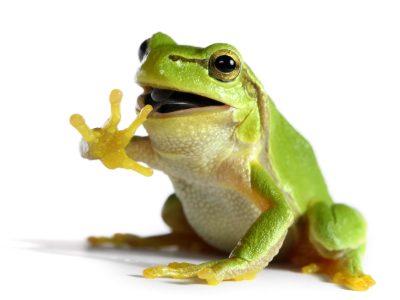 Frog Phobia, Vomit Phobia, Death Phobia